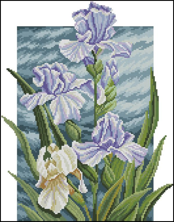 Floral Kingdom Irises