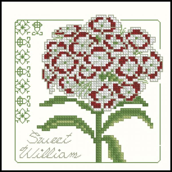 Carolyn Meacham Sweet William
