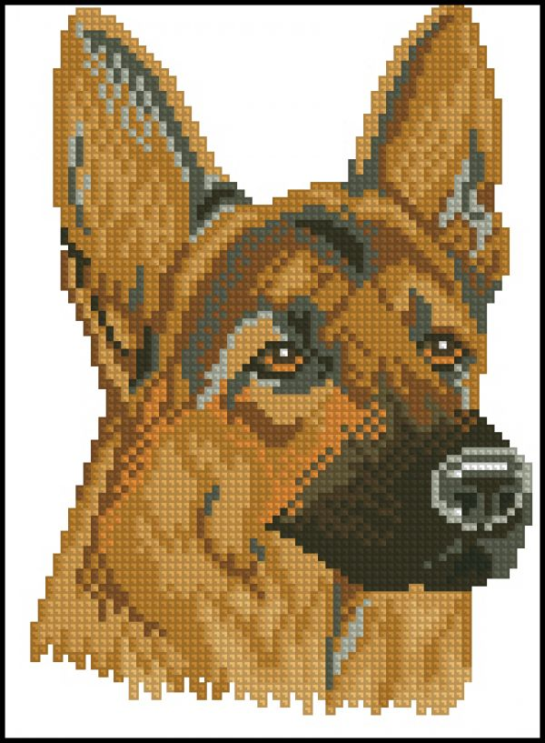 12627 German shepherd dog
